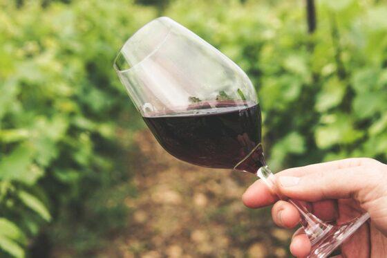 Felipe Sandoval - Mis recomendaciones - La nueva viticultura extrema